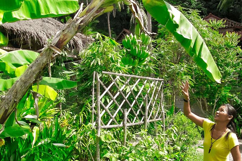 Ein Kochkurs in Thailand ist viel mehr als nur das Nachkochn von Rezepten. Die Thailänderin Azmi zeigt uns die Pflanzen und Früchte in ihrem Garten.