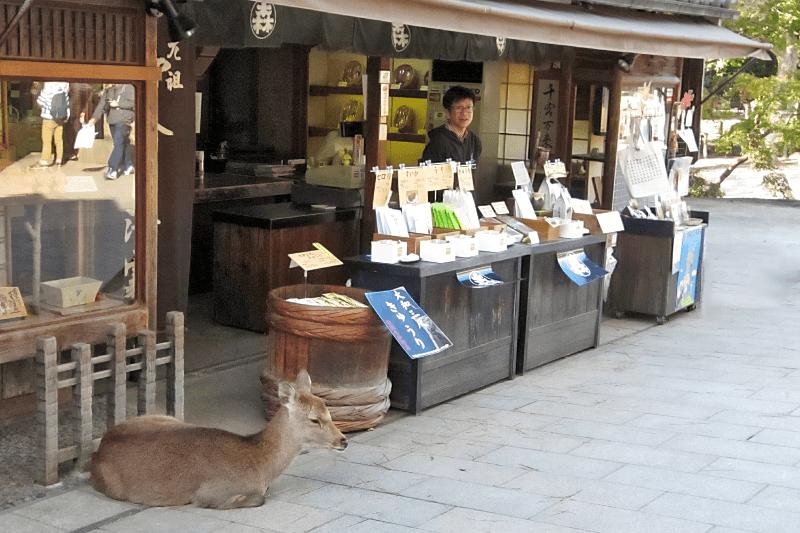 Verkaufsstand in Nara in Japan. Eine Hirschkuh liegt gemütlich vor dem Schaufenster und döst.